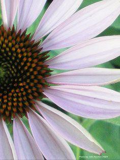 Sarnia Horticultural Garden. Ontario, Photographs, Explore, Places, Garden, Garten, Photos, Lawn And Garden, Gardens