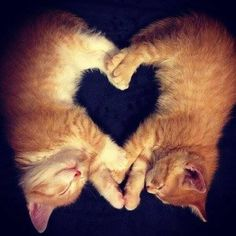 I ❤️ cats and kittens !