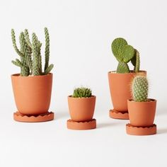Anderssen & Voll creates a collection  of tools for indoor gardening