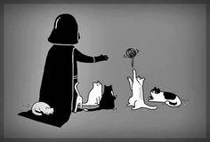 Kitties of the dark side...