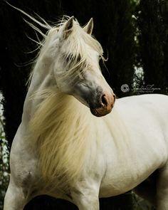 (97) Horse Lovers - Photos