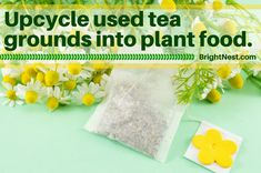 Learn how your used tea bags can help your garden grow at BrightNest.