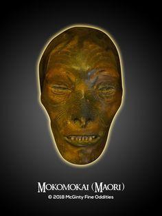 Mokomokai (Maori). McGinty Fine Oddities. www.FineOddities.com