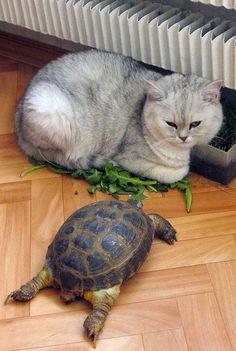 Turtles Geo: