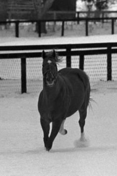 Secretariat...sweetest boy!!! My all time favorite horse!!!!!