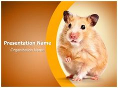 Hamster Powerpoint Template is one of the best PowerPoint templates by EditableTemplates.com. #EditableTemplates #PowerPoint #Fluffy #Curiosity #Animals And Pets #Mammal #Fur #Hair #Nose #Cute #Pets #Domestic #Paw #Pest #Rodent #Tiptoe #Mammals #Humor #Surprise #Long Hair #Small #Fun #Mischief #Hamster #Whisker #Life #Animal