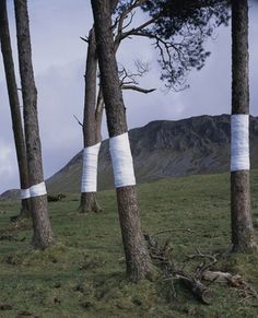 """Tree, Line"" is an ongoing series by Welsh artist Zander Olsen created by wrapping tree trunks with white material to ""construct a visual relationship between tree, not-tree and the line of horizon according to the camera's viewpoint."""