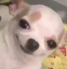 Cute Animal Memes, Cute Funny Animals, Funny Animal Pictures, Funny Cute, Funny Dogs, Cute Dogs, Super Funny, Cartoon Memes, Stupid Funny Memes