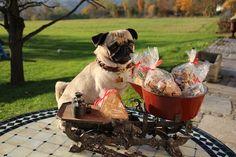 Hundebäckerei