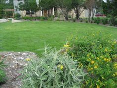 South Texas Drought Resistant Plants | Texas Native Plants