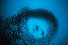 Image result for barracuda and diver