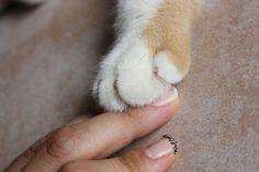 Amici per la zampa. Ashi's paw. @wolflady90