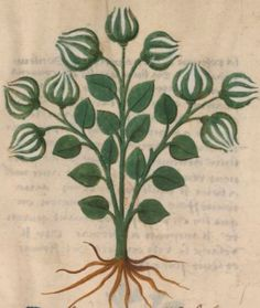 Medieval Pattern, Plant Science, Greek Art, Botany, Motifs, Apothecary, Florals, Herbalism, Plant Leaves
