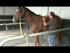 ▶ SADDLE AND BACK SORENESS IN A RACE HORSE WITH CHRISTIAN LANGEDER - YouTube