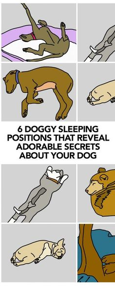 Dog sleeping positions and their meanings