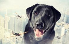 Dreamy Portraits of Rescues with Sarolta Bán   It's a Lab Thing