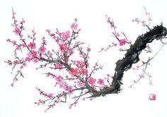 flores del cerezo dibujo - Buscar con Google