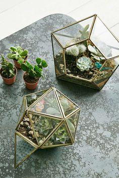 Urban Grow – Sternförmiger Terrarium-Pflanzbehälter