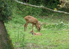 Best of friends - a deer and a fox Ice Houses, Coach House, New Forest, Winchester, Over The Years, Woodland, Deer, Survival, Fox