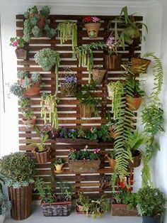 Vertical pallet garden on back wall of house