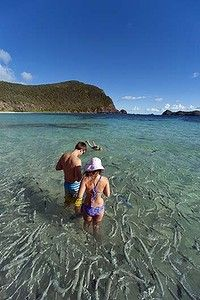 Pristine ... fishy business just off the beach at Lord Howe Island,Australia