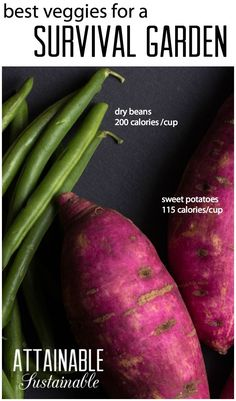 Growing calorie-dense vegetables is crucial for a survival garden. Homesteading ~ prepping ~ survival ~ gardening ~ crisis