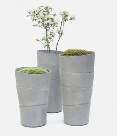 using Simple Planters Inspired by Growth-Form of Palm Tree