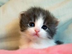 fotos de animales tiernos - Buscar con Google