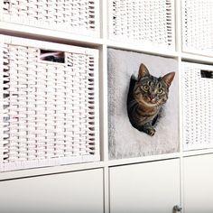 Camas originales para gatos ahora más económicas en zooplus: Cueva Trixie para estantería para gatos