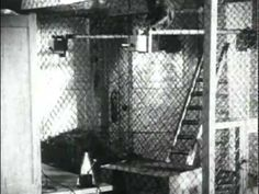 Originele beelden van het Pavlov Experiment. Leuke aanvulling om te tonen bij les over conditionering.