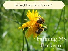 If you are thinking about adding honey bees to your backyard farm make sure to do your research!  Here are some good books to get you started.