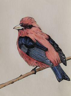 bird drawing by maria farinola