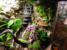 How to Build a Dart Frog Viv (round - Page 6 - Reptile Forums - Terrariums Chameleon Terrarium, Tree Frog Terrarium, Gecko Terrarium, Aquarium Terrarium, Reptile Terrarium, Terrarium Plants, Frog Habitat, Reptile Habitat, Reptile House