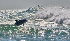 Wild and Free Byron Bay Dolphins