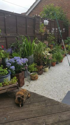 Cat and container garden