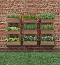 Herbs can be grown anywhere you like but a having a herb garden design makes it more appealing. Wall Herb Garden Indoor, Hanging Herb Gardens, Veg Garden, Vegetable Garden Design, Garden Beds, Vegetable Gardening, Herb Wall, Vertical Vegetable Gardens, Vertical Succulent Gardens