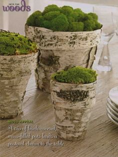 Birch Bark covered Terracotta pots with a moss garden!