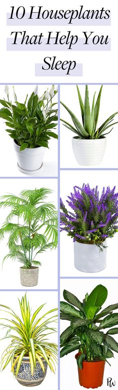 10 Houseplants That Can Actually Help You Get a Better Night's Sleep #purewow #bedroom #trick #tip #plants #home