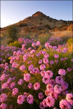 Albuquerque, NM...yes, the desert can produce such delicate beauty <3