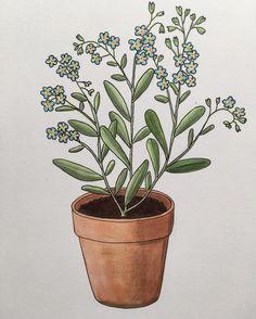 391 vind-ik-leuks, 8 reacties - ♡ Plants & Illustrations ♡ (@drawingplantlady) op Instagram: 'Forget-me-nots drawing '