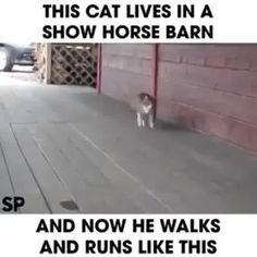 I am HORSE!
