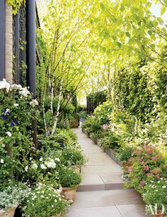 Shade-loving plants such as foxgloves, hostas, spirea, and English and Boston ivies grow on a terrace.