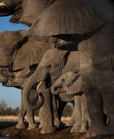 ELEPHANTS MARCHING ACROSS SAVANNA Beauty of the Animal Kingdom 24x36 WALL POSTER