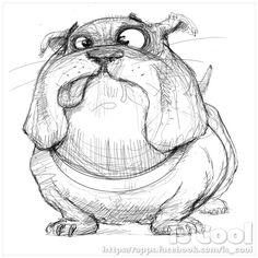 Bulldog Sketche