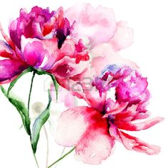 Beautiful Peony Flowers, Watercolor Painting Stock Photo, Picture ...