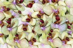 Image shows a stylised composite of orchid blooms.