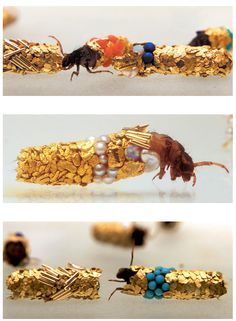 Caddisfly larvae build protective cases using materials found in their environment. Artist Hubert Duprat supplied them with gold leaf and precious stones. This is what they created.
