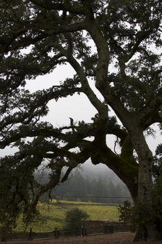 California Landmarks - Sonoma County - Jack London State Historic Park