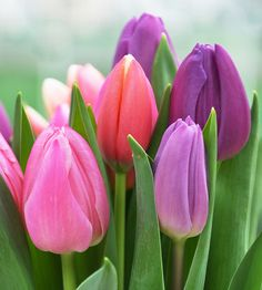 ....tulips! Absolutely sophisticated, simple and timeless.