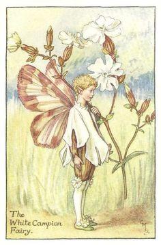 http://www.wellandantiquemaps.co.uk/lg_images/The-White-Campion-Fairy.jpg